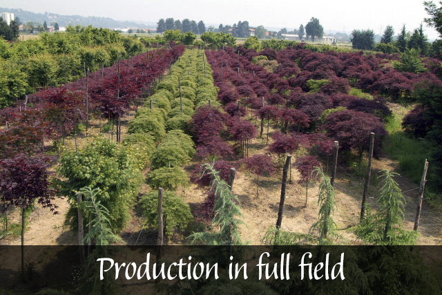 Produzione in pieno campo